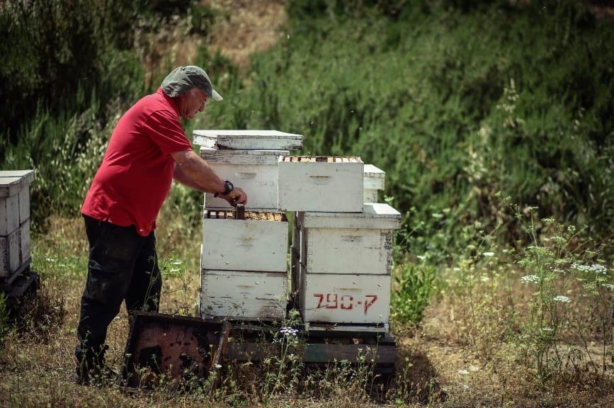 'יום עם הדבוראי'